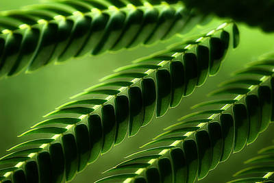 Mimosa Tree Leaf Abstract Art Print by Michael Eingle