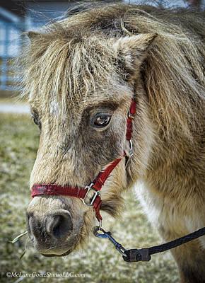 Photograph - Minature Horse by LeeAnn McLaneGoetz McLaneGoetzStudioLLCcom