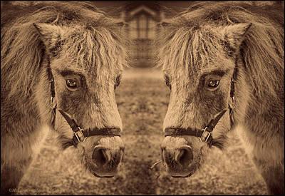 Photograph - Minature Horses Black And White by LeeAnn McLaneGoetz McLaneGoetzStudioLLCcom