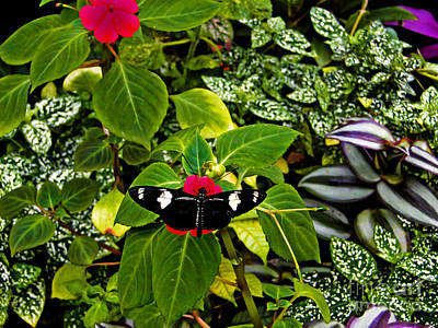 Rest Stop Photograph - Mindo Butterfly At Rest by Al Bourassa
