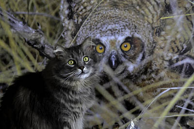 Photograph - Ming--owlprintwide-eye by Rae Ann  M Garrett