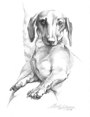 Drawing - Mini Dachshund Sitting In A Chair by Alena Nikifarava