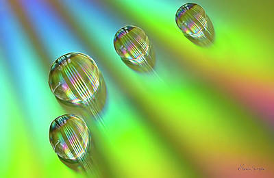 Photograph - Mini Rainbows by Vickie Szumigala