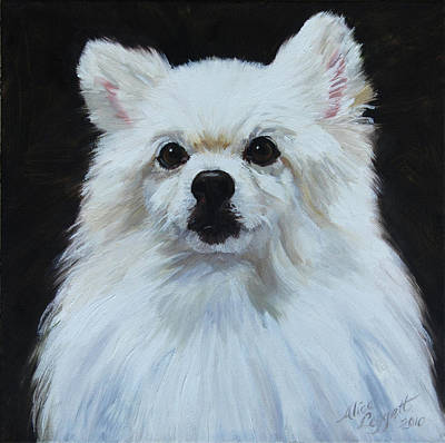 Miniature American Eskimo Dog Art Print