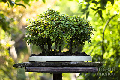 Photograph - Miniature Green Forest Bonsai by Beverly Claire Kaiya