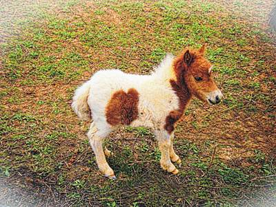 Photograph - Miniature Horse by Joe Duket