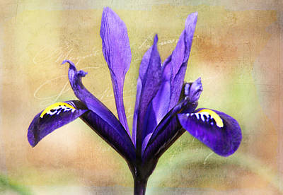 Digital Art - Miniature Iris  by Trina  Ansel