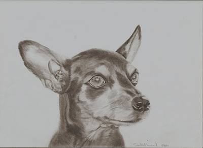Pinscher Drawing - miniature pinscher Tronter by Sandra Muirhead