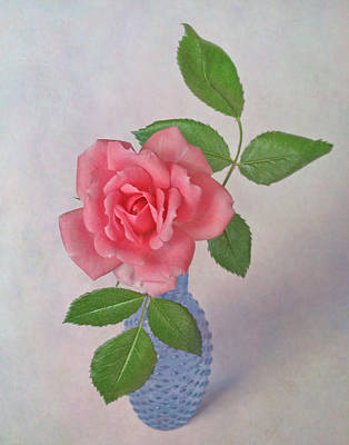 Photograph - Miniature Rose IIi by David and Carol Kelly