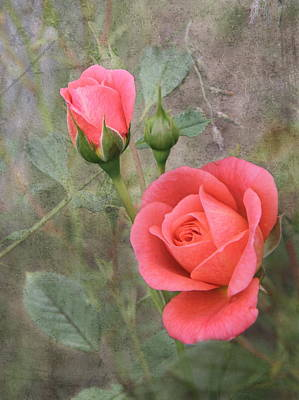 Miniature Roses Art Print by Angie Vogel