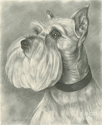 Pup Drawing - Miniature Schnauzer by Lena Auxier