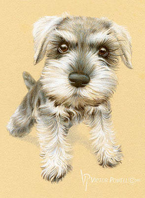 Watercolor Pet Portraits Drawing - Miniature Schnauzer Puppy Portrait by Victor Powell