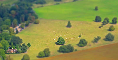 Photograph - Miniature Sheep Farm by Heidi Hermes