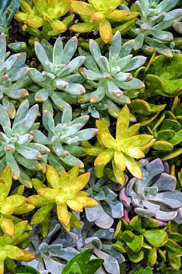 Sempervivum Painting - Miniature Succulent Plants 2 by Lanjee Chee