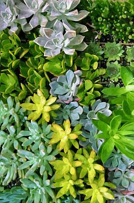Sempervivum Painting - Miniature Succulent Plants 3 by Lanjee Chee