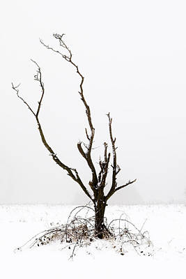 Photograph - Minimal Tree by Mick House
