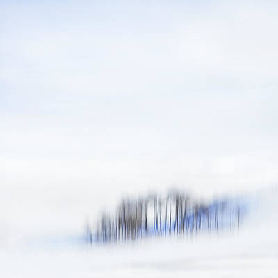 Photograph - Minimal Trees by Theresa Tahara