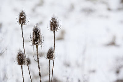 Photograph - Minimalistic Winter Beauty by Alex Potemkin