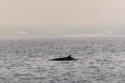 Minke Whale Art Print by Kai Bergmann