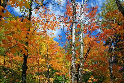 Photograph - Minnesota Autumn Foliage by Cascade Colors