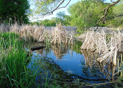 Wetland Photograph - Minnesota Wetland by Jim Hughes