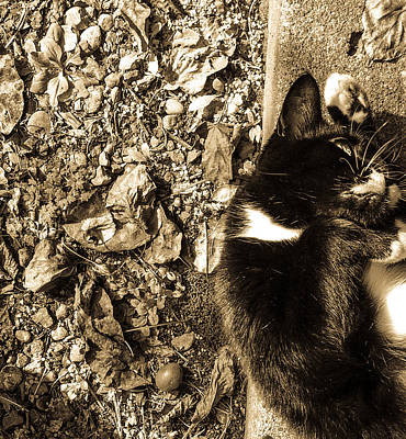 Photograph - Minnie Maus In The Sun by Ronda Broatch