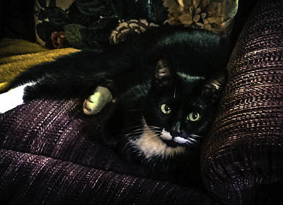 Photograph - Minnie Owns My Chair 2 by Ronda Broatch