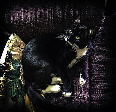 Photograph - Minnie Owns My Chair 3 by Ronda Broatch