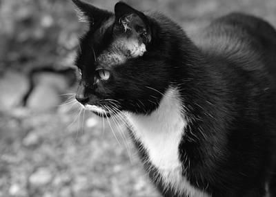 Photograph - Minnie Stare by Ronda Broatch