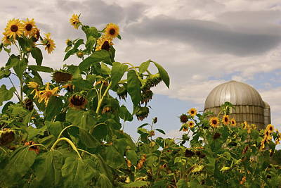Art Print featuring the photograph Minot Farm by Alice Mainville