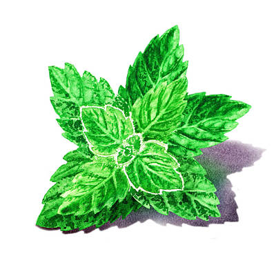 Merchandise Painting - Mint Leaves by Irina Sztukowski