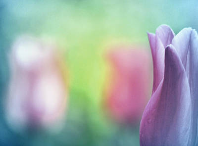 Pastel Photograph - Miracles Happen by The Art Of Marilyn Ridoutt-Greene