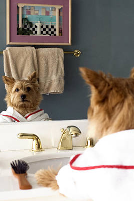 Funny Dog Digital Art - Mirror Fun With A Norwich Terrier  by Susan Stone