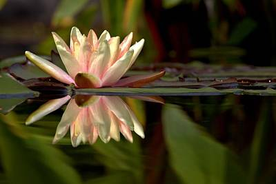 Waterlily Photograph - Mirror Image by Carol R Montoya