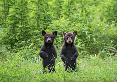 Photograph - Mirror Image Cubs by W. Drew Senter, Longleaf Photography