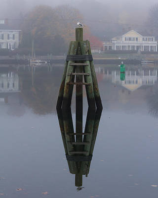 Mystic Photograph - Mirror Image Seagull Reflection by Kirkodd Photography Of New England