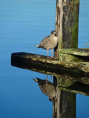 Photograph - Mirror Mirror by Jacqueline  DiAnne Wasson