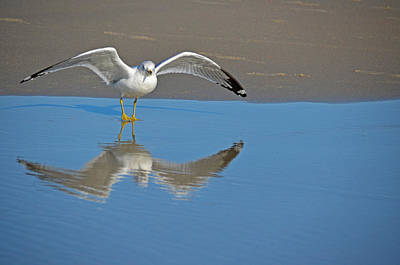 Photograph - Mirror Mirror by Linda Brown