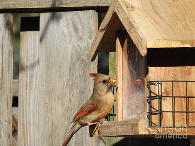 Photograph - Mirror Mirror On The Birdfeeder by Brenda Brown