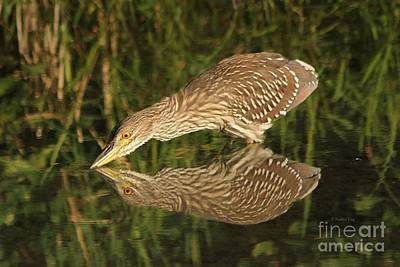 Photograph - Mirror Mirror On The Wall Who Is The Fairest Heron Of All by Heather King