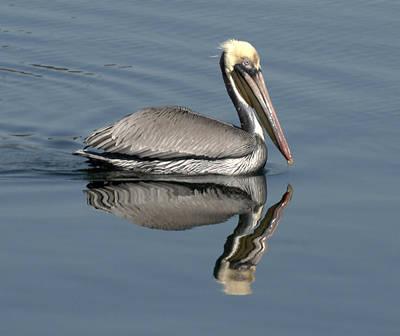 Mirror Pelican Art Print