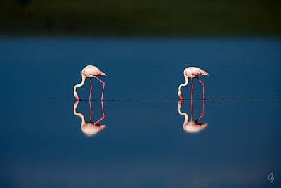Mirrored Flamingos Art Print by Jeppsson Photography