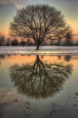 Laura James Photograph - Mirrored Tree by Laura James
