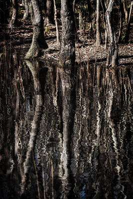 Photograph - Mirrored Trees by Zoe Ferrie