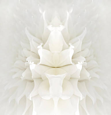 Photograph - Mirrored White Dahlia Flower Abstract by Jennie Marie Schell