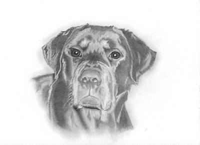 Rottweiler Dog Drawing - Mischa by Larry Scarborough