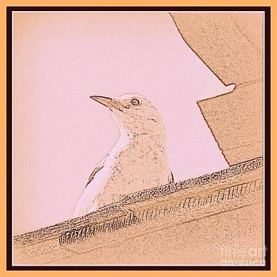Photograph - Clark's Nutcracker Bird Pencil Sketch  by Susan Garren