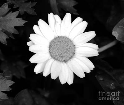 Miss Daisy Print by Andrea Anderegg