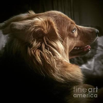 Gsd Wall Art - Photograph - Miss Hannah #dog #hannah by Isabella Shores