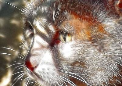 Photograph - Miss Kitty by Kathy Baccari
